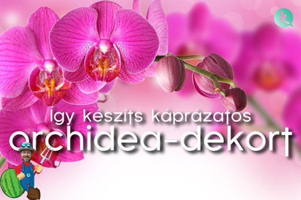 orchidea-dekor