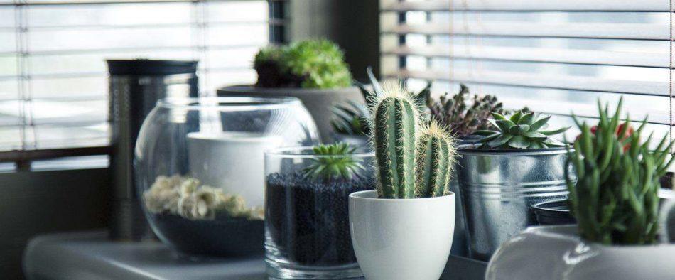 szobanövényeink vízigénye