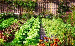 a kerttervezés alappillérei
