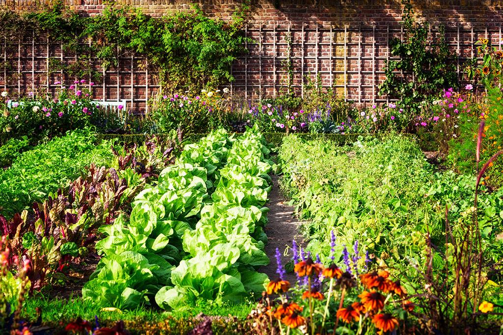 Hogyan tervezd meg a kerted?