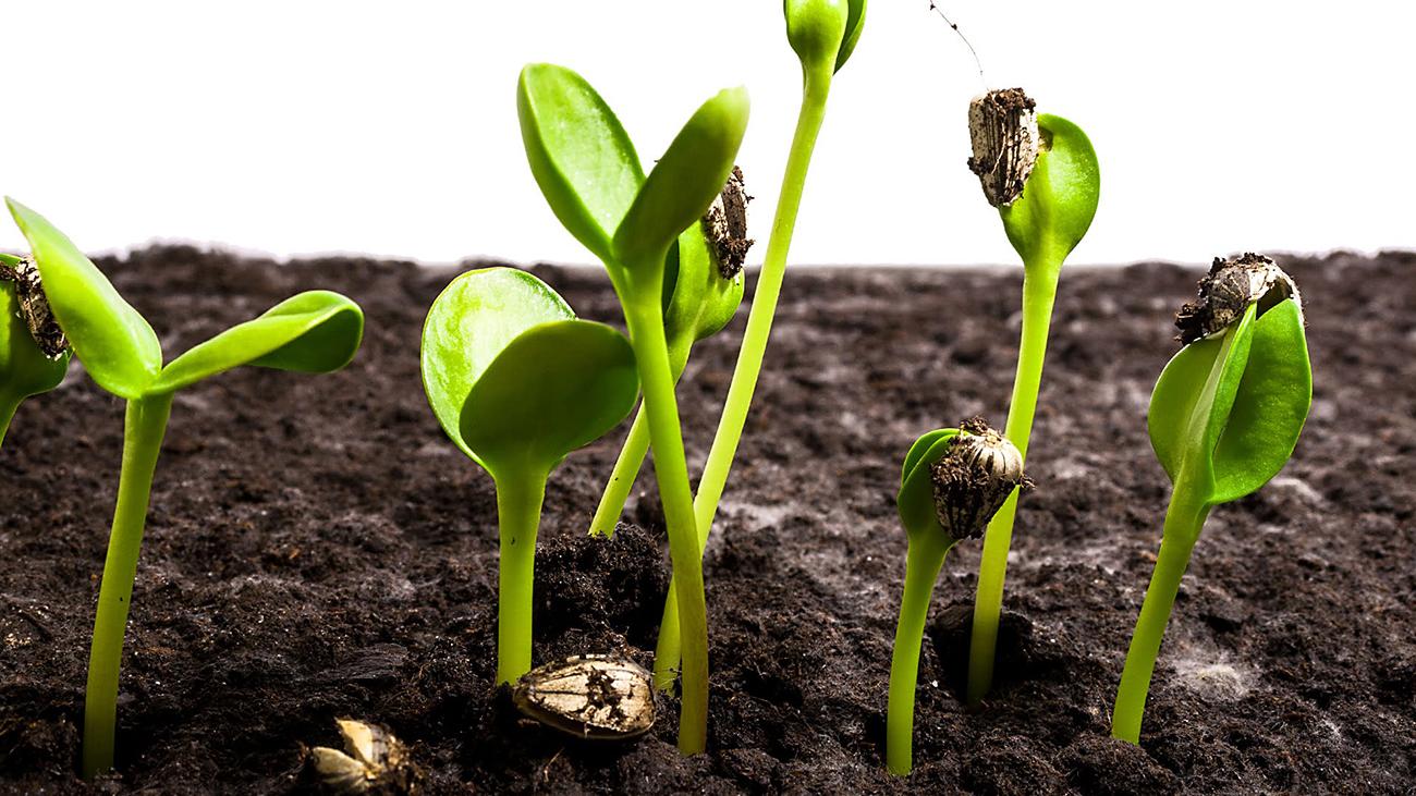 Így neveld a növényed 1. - A magvetés