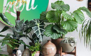 szobanövény gondozási tanácsok