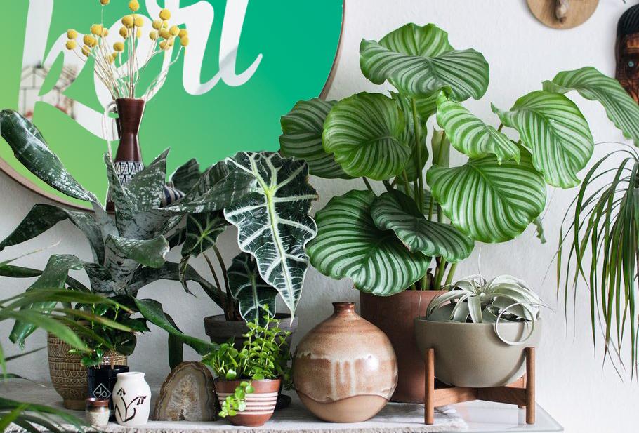 Ezekkel a ravasz tippekkel szebbé varázsolhatod a szobanövényeidet!