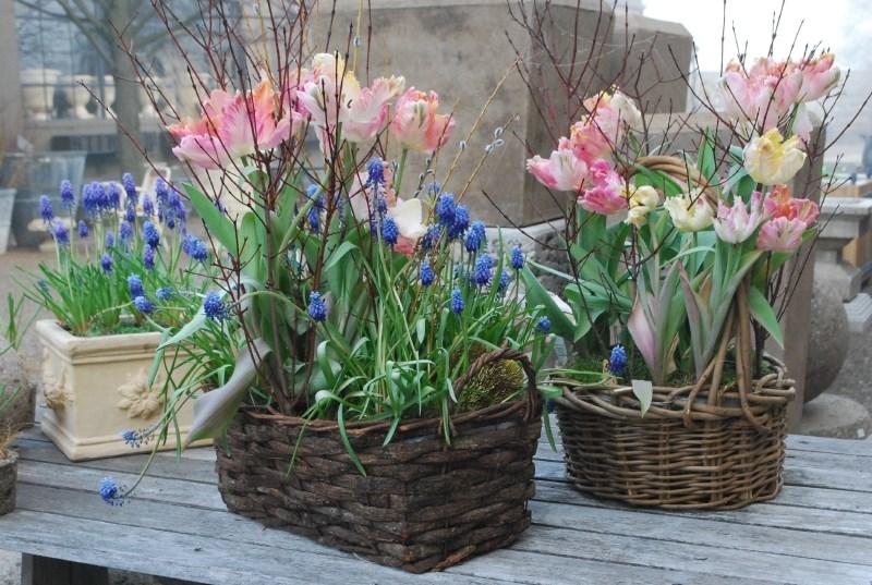 tavaszi-hagymas-virag