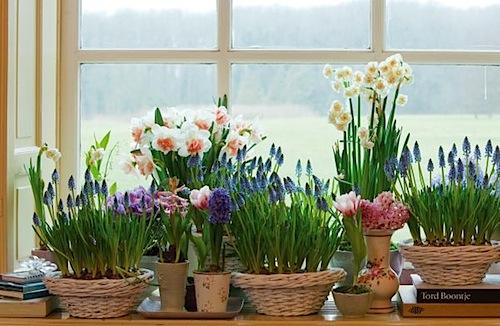 tavaszi, hagymás, virágkosár