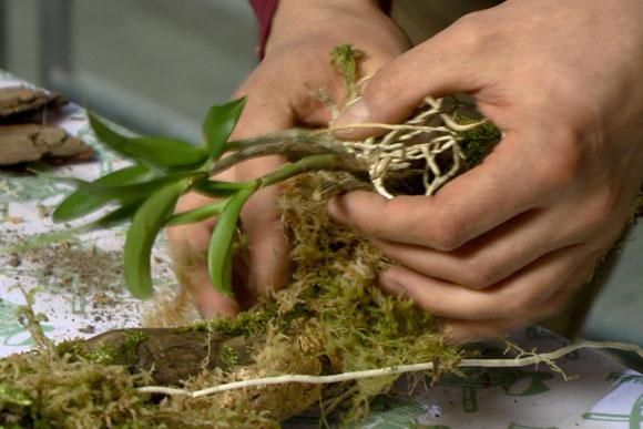 epifiták gondozása