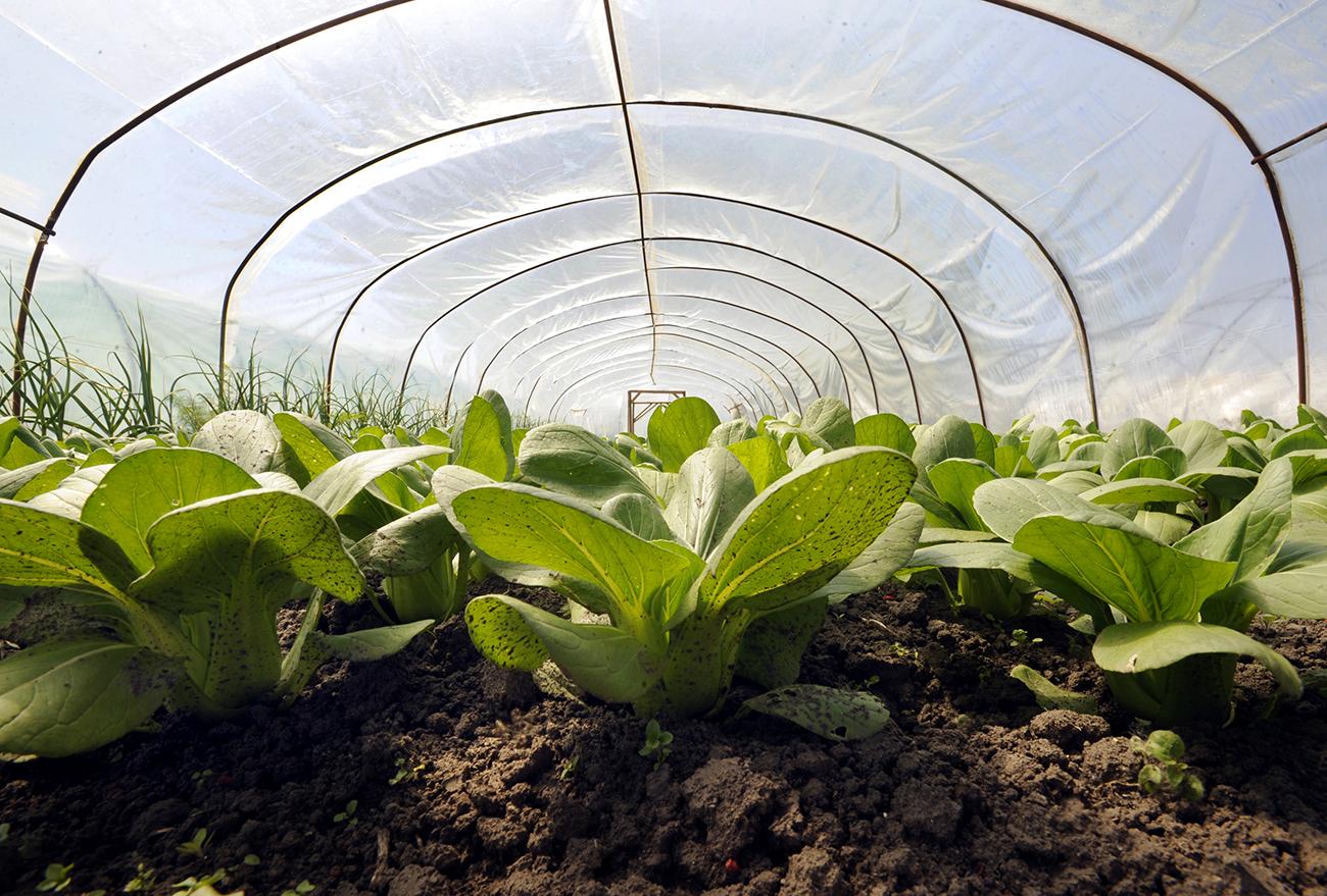 Így készíts fóliasátrat és szüretelj zöldséget 3-4 héttel korábban - videó