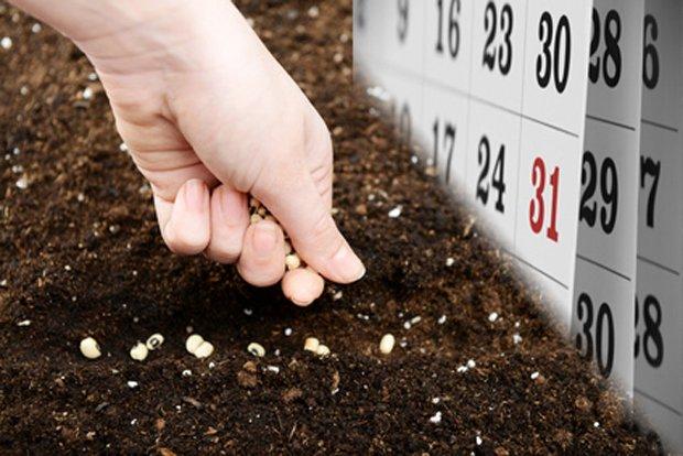 zöldség-vetés-március
