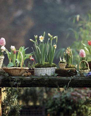 hagymás virágok kosár, dekor, dekoráció, tavasz