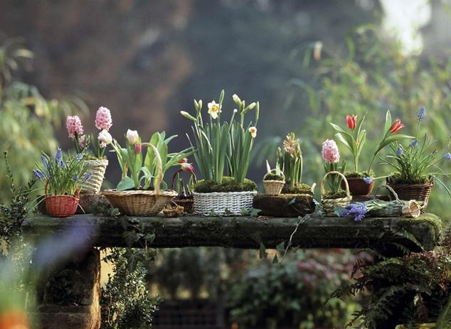 Varázsoljunk tavaszt a lakásba hagymásokkal!