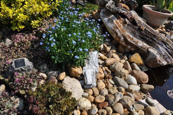 kerti tó, tisztítás, tavasz