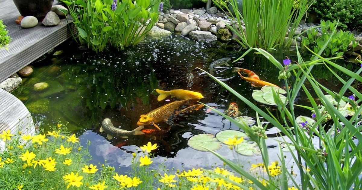 Csobogók, kisebb kerti tavak tavaszi karbantartása