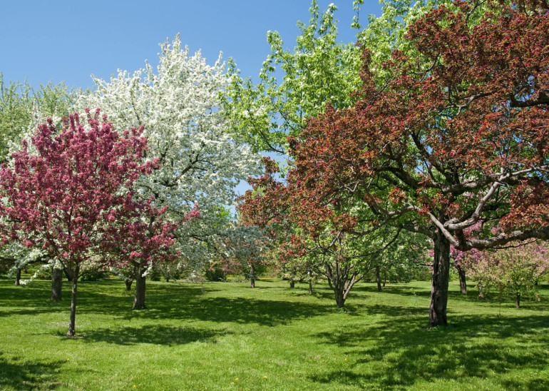 7 csodás díszfa, mellyel lenyűgöző lesz a kerted tavasszal!