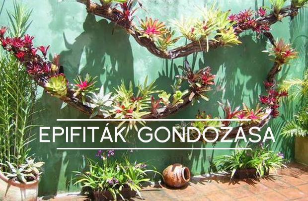epifiták