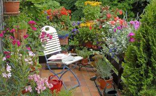 május, kert, kerti teendők