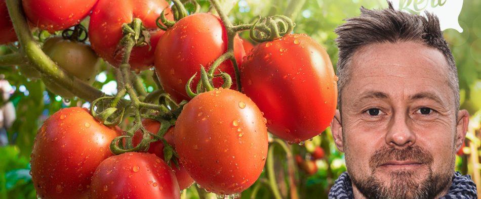 paprika és paradicspm ültetése