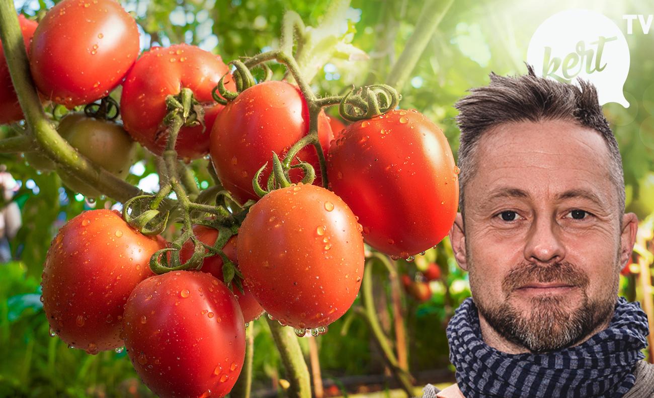 Praktikák paradicsom & paprika ültetéséhez- videó