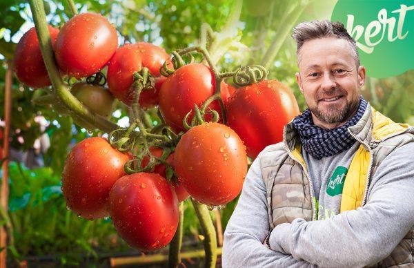 Így ültesd a paradicsomot - ha jót akarsz!/KertTV