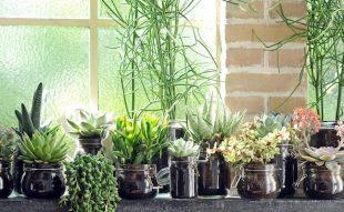 szobanövény, kiszoktatás