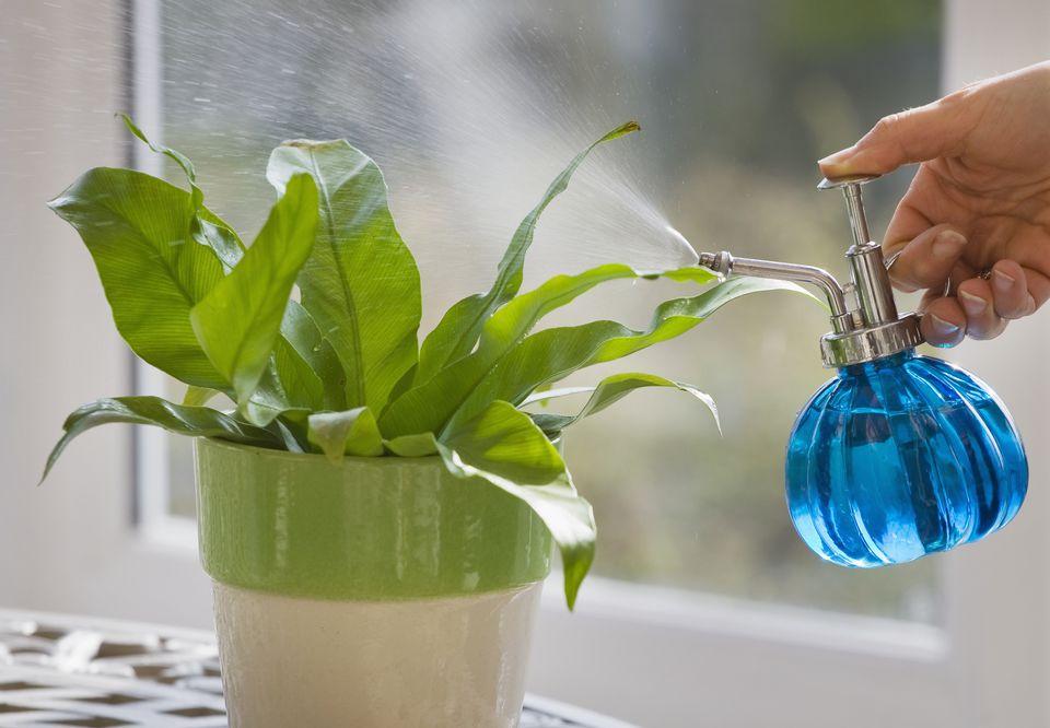 Éltető-gyilkos víz avagy hogyan öntözzük jól szobanövényeinket?