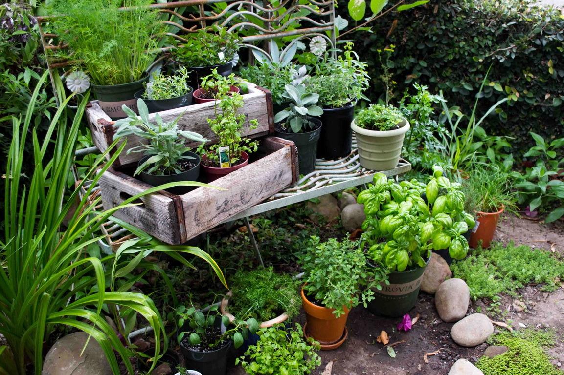 Még több fűszert a kertbe! - Tanácsok kedvenc fűszernövényeink  szaporításához