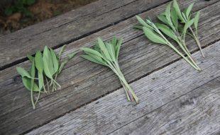 nyári növényszaporítás