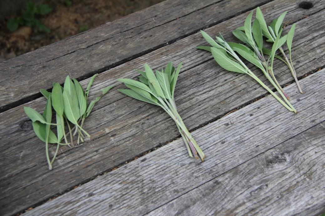 Szaporodjunk, sokasodjunk növény fronton nyáron is!