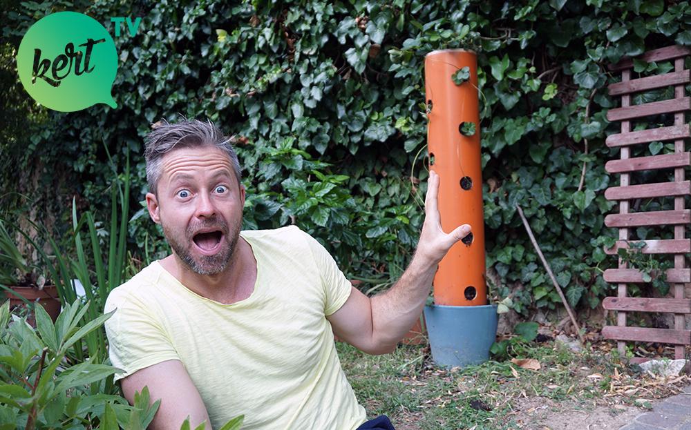 Az epertorony titka, avagy mi történt a szamócás-csővel