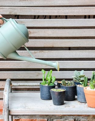 kaktusz-ontozese
