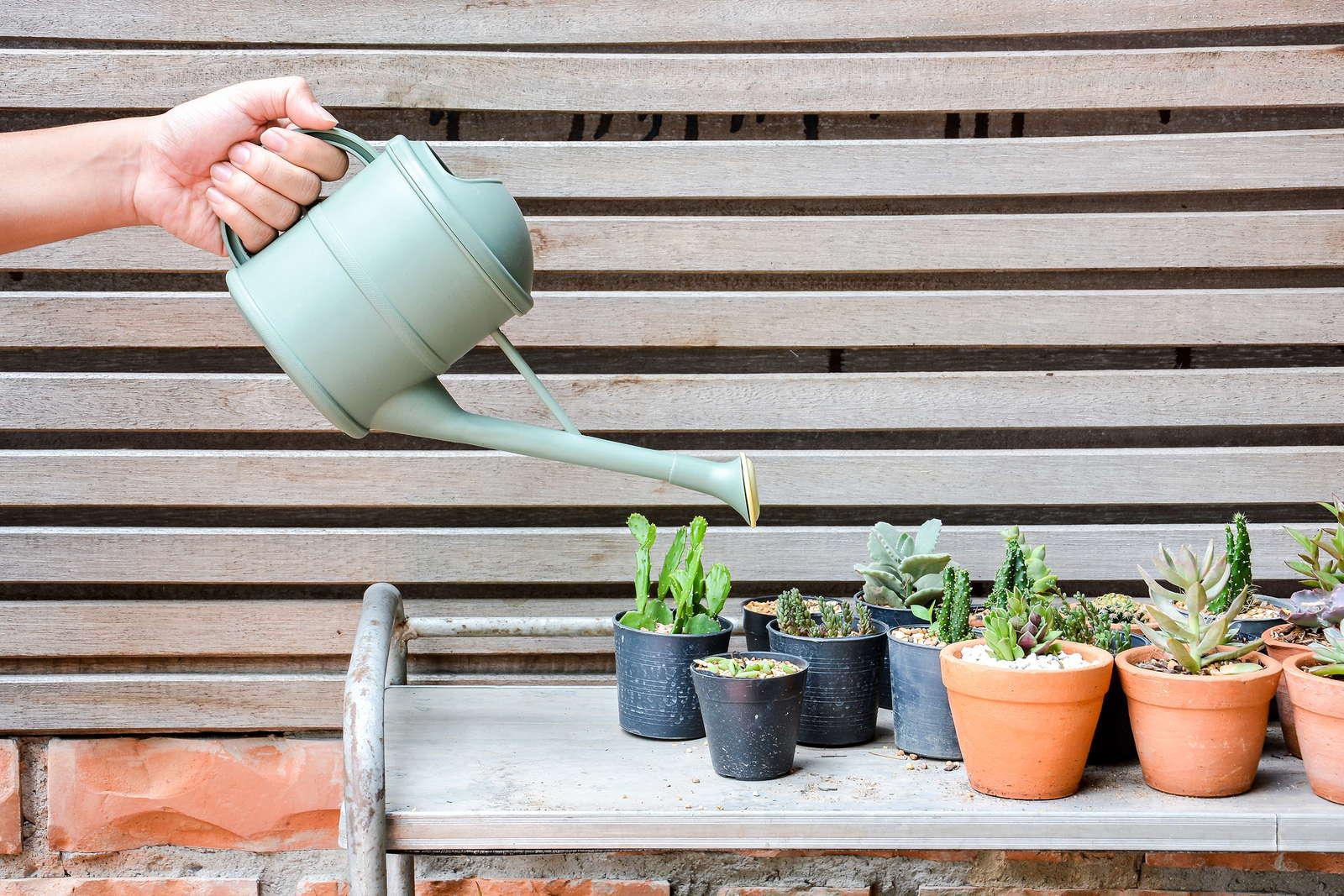 Minden, amit kaktuszod öntözéséről tudnod kell