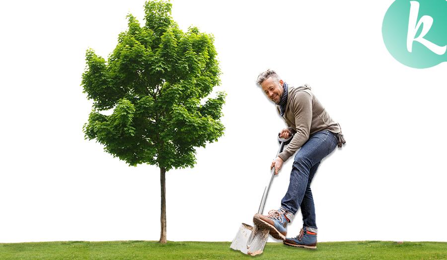 őszi gyümölcsfa ültetés