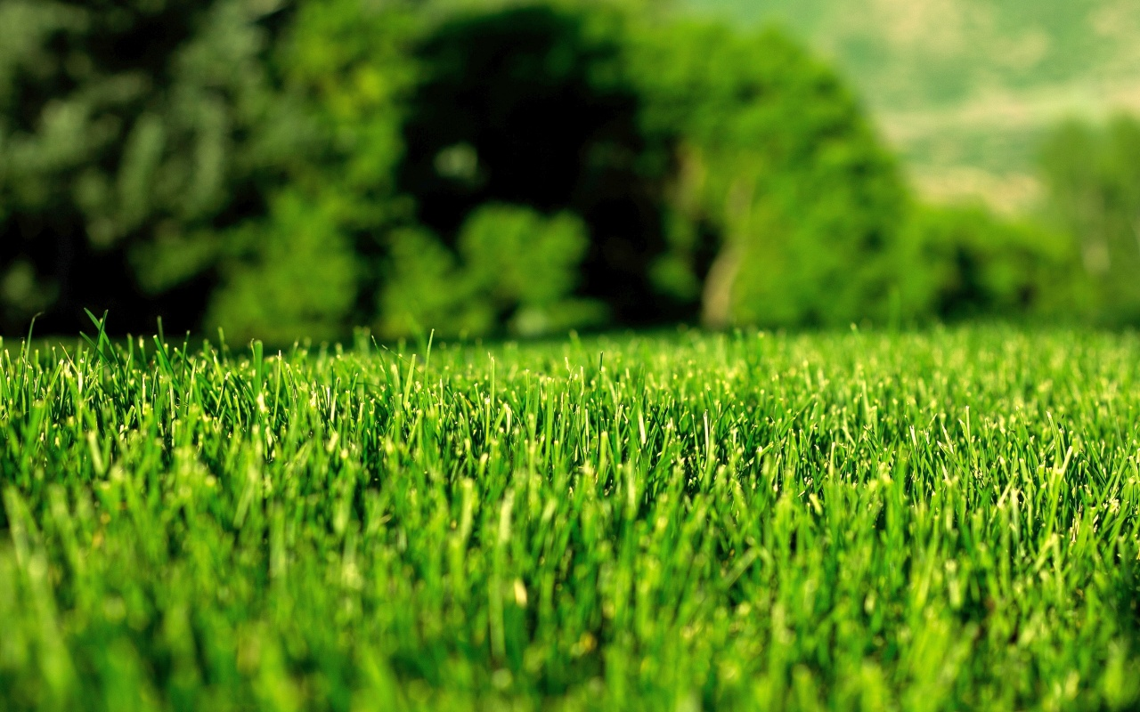 Mitől lesz szép a gyep? - Az öntözés, fűnyírás, táplálás aranyszabályai