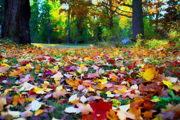 kerti-teendok-oktober