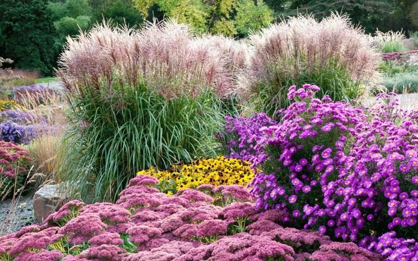 7 színpompás őszi évelőágyás a természetes kertek szerelmeseinek