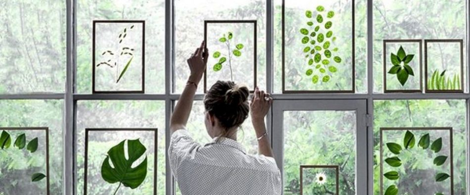 préselt növények képkeretben