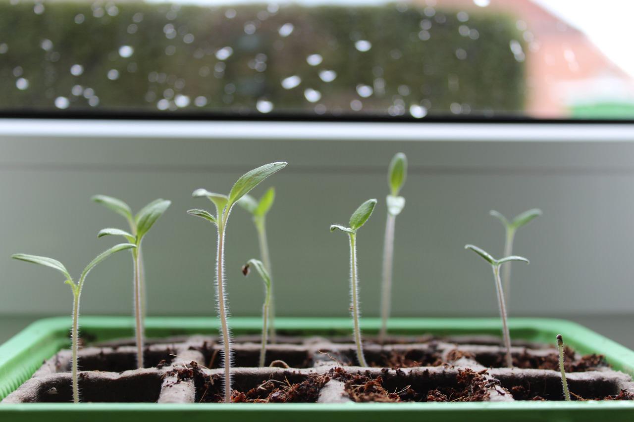 Kihagyhatatlan kerti teendők februárban - kezdődik a szezon!