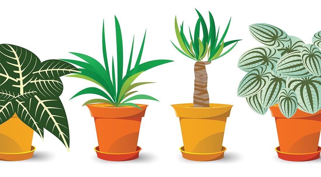 Hány növényt ismersz fel? - kvíz játék