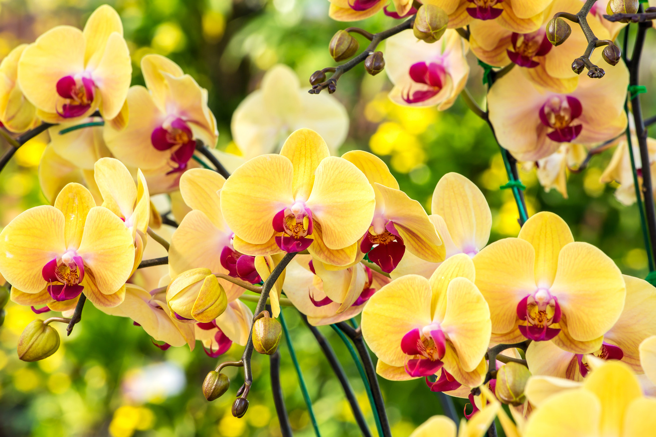 Egy profi termesztő tanácsai az orchidea tartásáról- videó