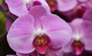 orchidea, kviz