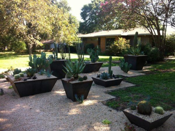kaktuszkert