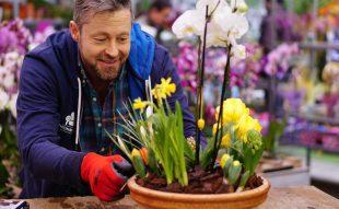 hagymás, virág, kosár, orchidea