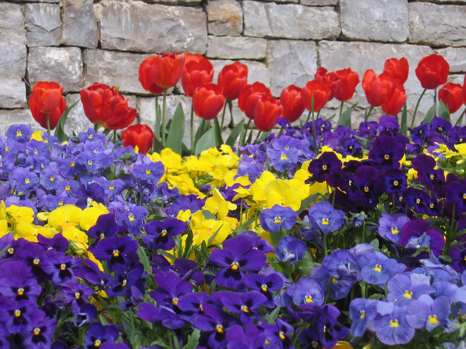 Szeretnél sok-sok hagymást a kertbe? Íme egy profi ültetési terv!