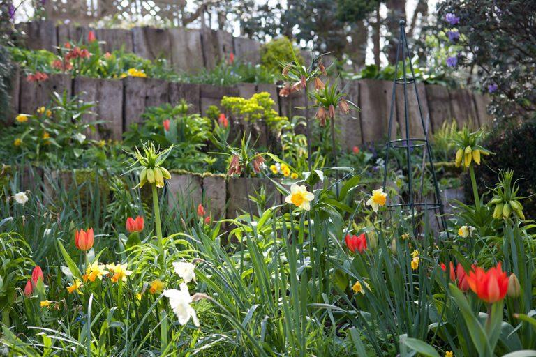tavaszi-hagymasok