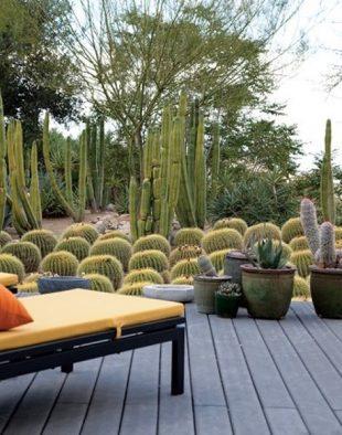 könnyen fenntartható kaktuszkert