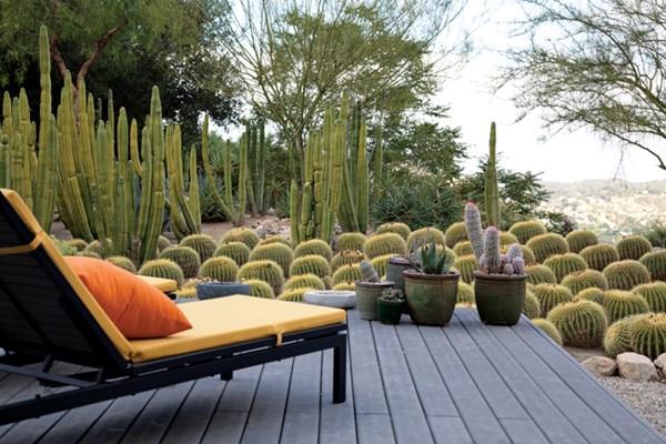 modern kaktuszkert