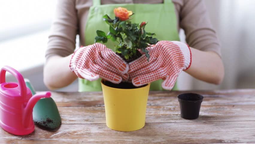 Itt az idő, hogy átültessük cserepes virágainkat! 6+1 Tipp