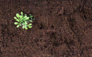 talajjavítás, kerti talaj, trágyázás, komposztálás