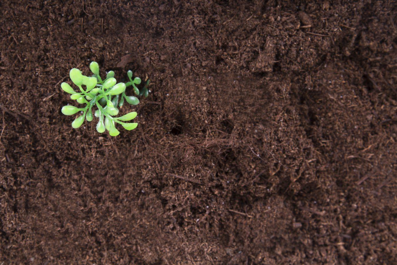 Hogyan javítsuk kertünk talaját természetes módon?