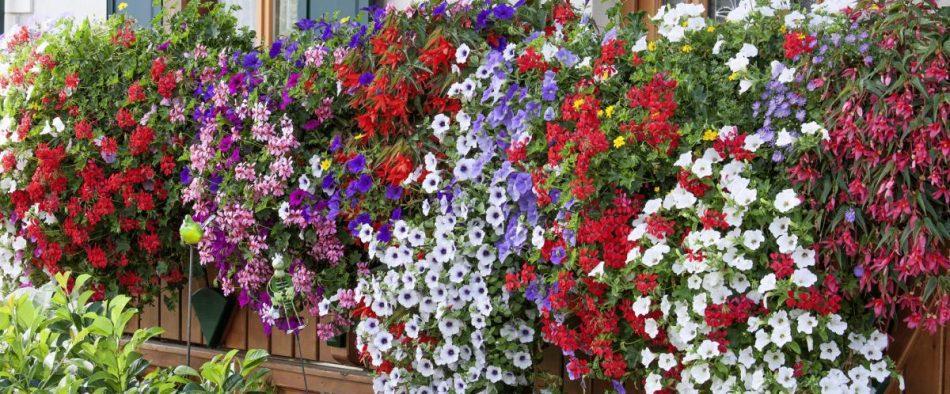 balkonláda, virág