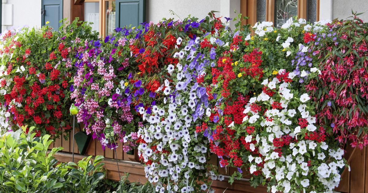 Nyári virágpompa a balkonon. Mit ültessünk a balkonládába?
